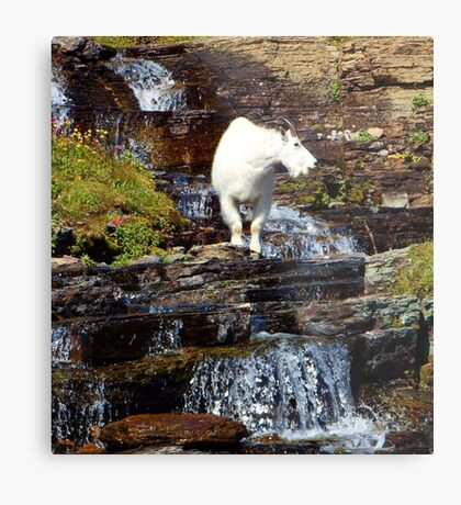 Logan Pass Mountain Goat Metal Print