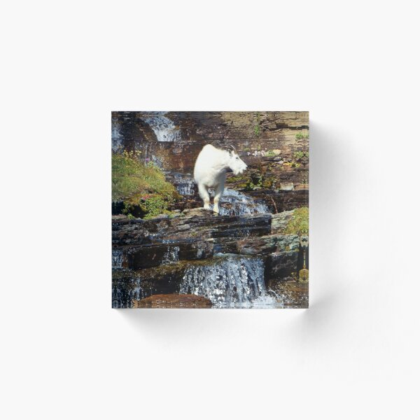 Logan Pass Mountain Goat Acrylic Block