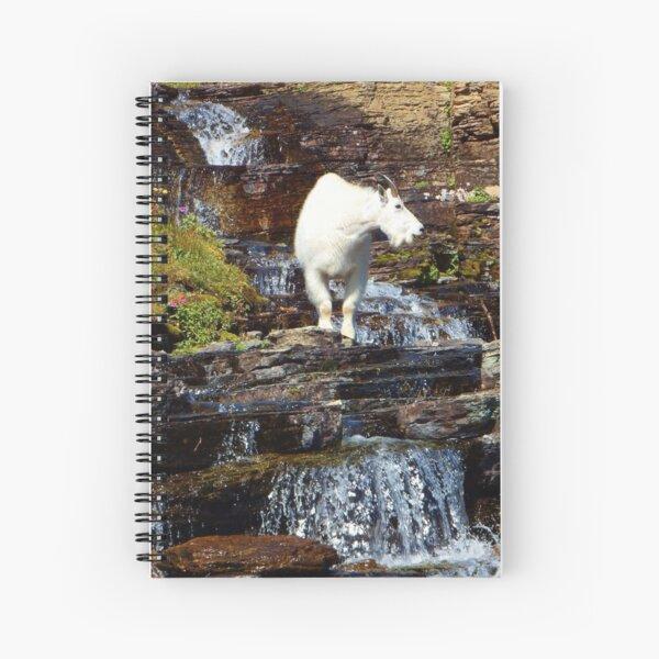 Logan Pass Mountain Goat Spiral Notebook