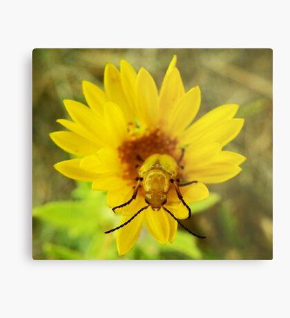 Yellow Flower Beetle Metal Print