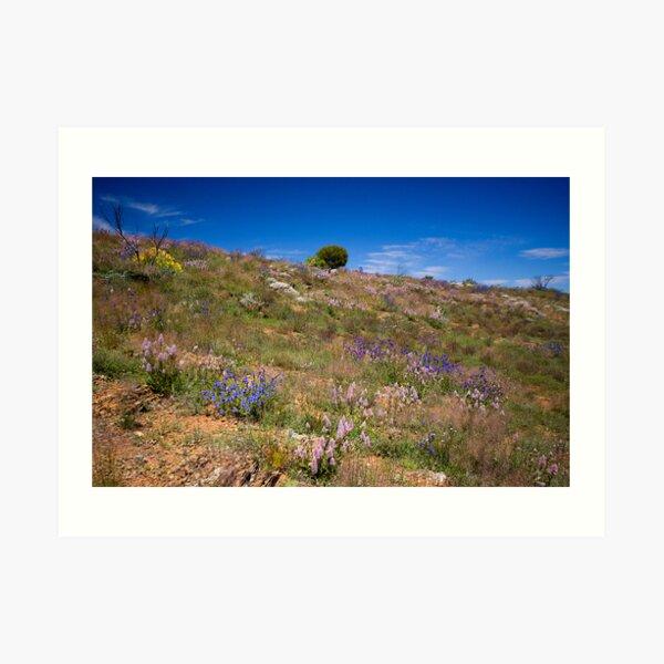 Hill of Flowers Art Print
