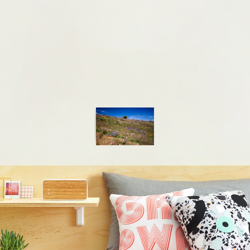 Hill of Flowers Photographic Print