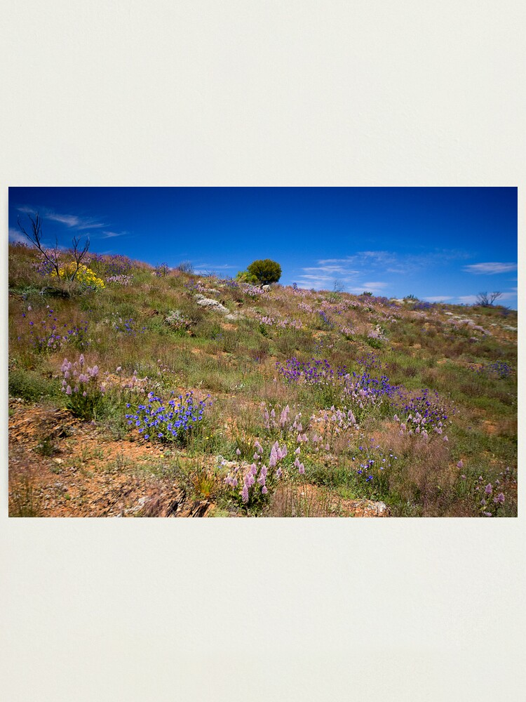 Alternate view of Hill of Flowers Photographic Print
