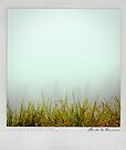 Grass Polaroïd by laurentlesax