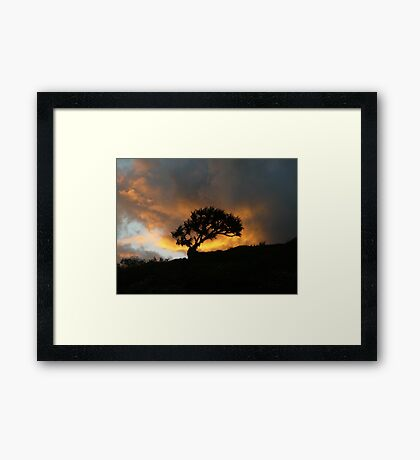 Lone Tree in the Sunset Framed Print