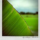 Leaf Polaroïd by laurentlesax