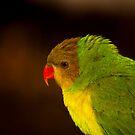 Green Bird! by vasu