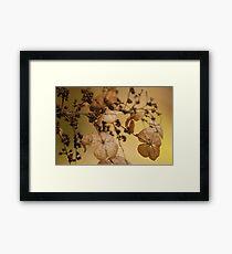 Beauty of Dry Leaf! Framed Print