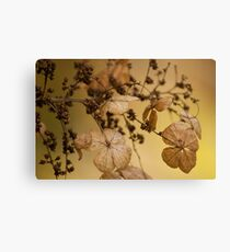 Beauty of Dry Leaf! Canvas Print