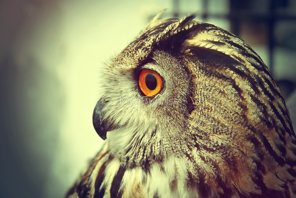 Owl by KisaSunrise