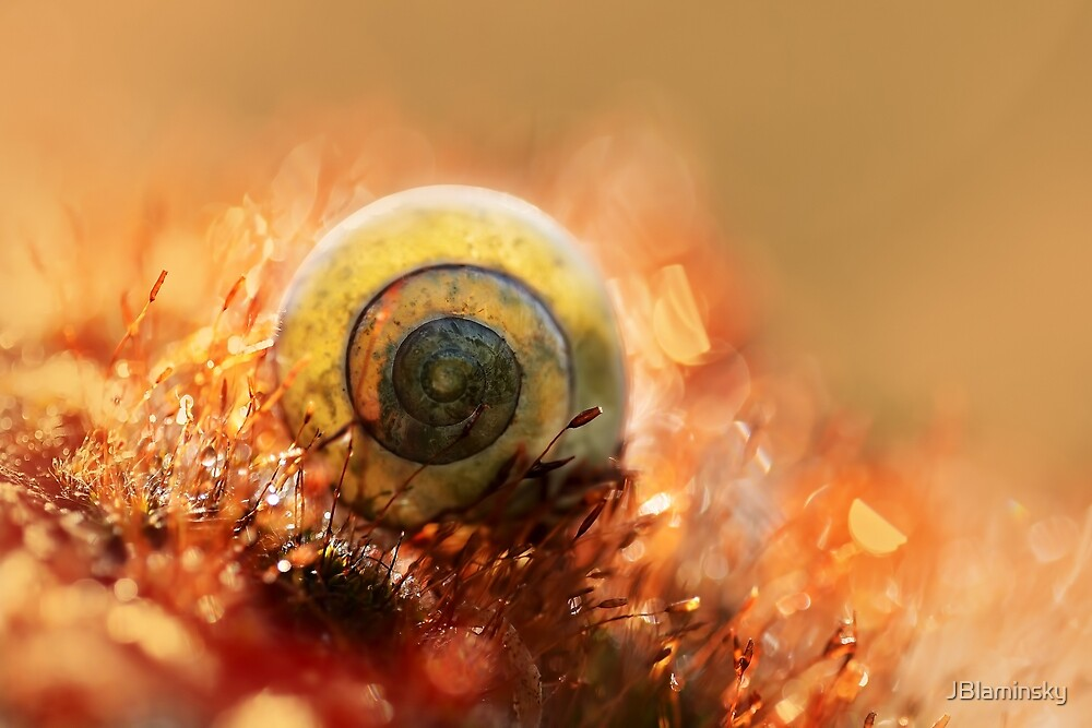 Morning impression with small shell by JBlaminsky