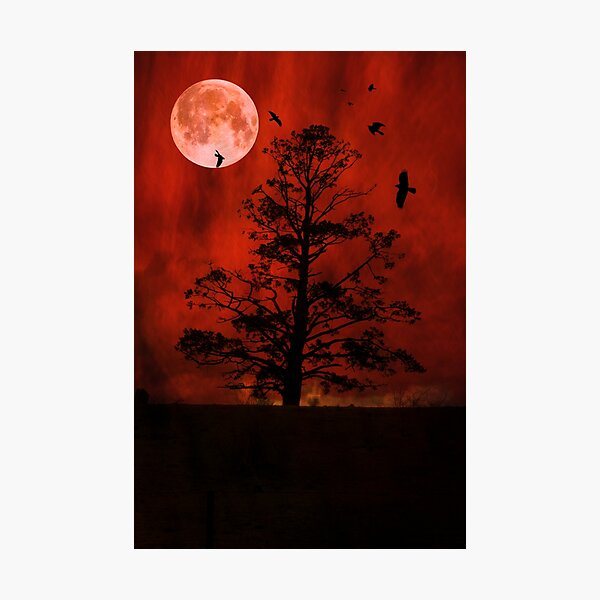 The Witching Tree Photographic Print