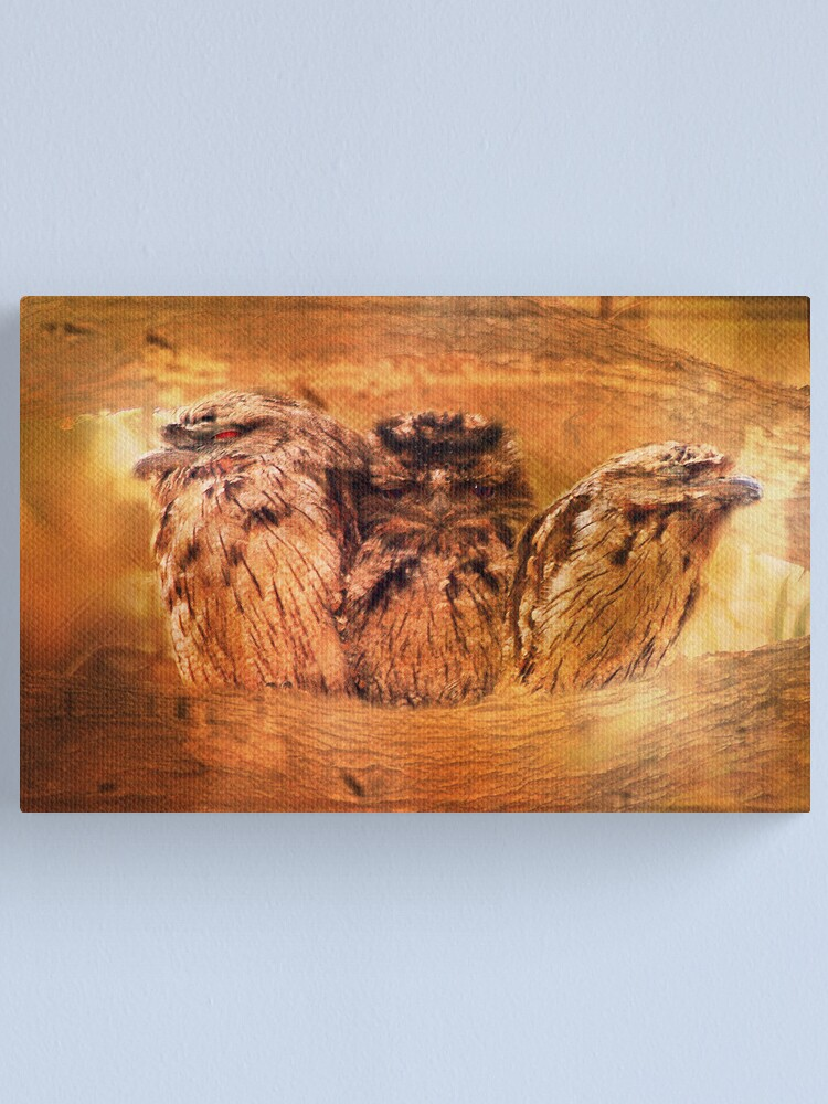 Alternate view of Tawny Frogmouth Canvas Print