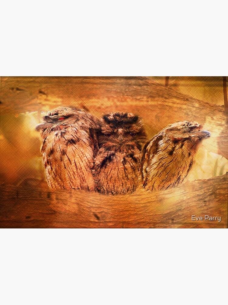 Tawny Frogmouth by AdamsWife