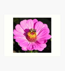 Bee and Pink Flowe Tyler Rose Garden Center Art Print