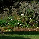 lets peek out to the blue yonder (Floridas bird paradise ) by Elizabeth Rodriguez
