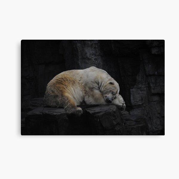 Sleeping Polar bear untouched Canvas Print