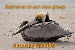 New Wildlife Group  by Karen  Moore