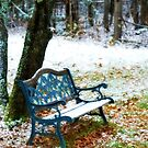 The first snow by Alana Ranney