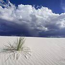 White Sands by MattGranz