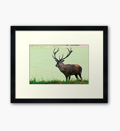 Red Stag, Wollaton Park Framed Print