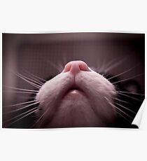 Mouth, nose and whiskers cat Poster