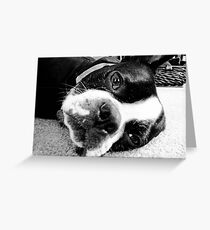 The Pete - Lazy Sunday Greeting Card