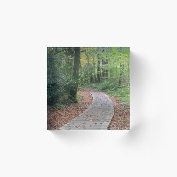 enchanted forest trail Acrylic Block