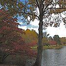 October at Swan Lake by Gordon Taylor