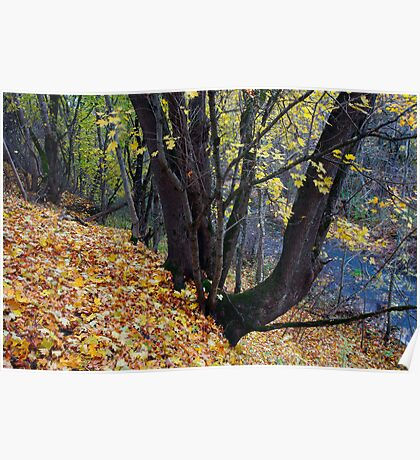 Trees in Autumn Forest Poster