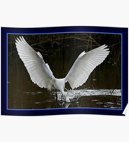 The Fishing Egret Poster