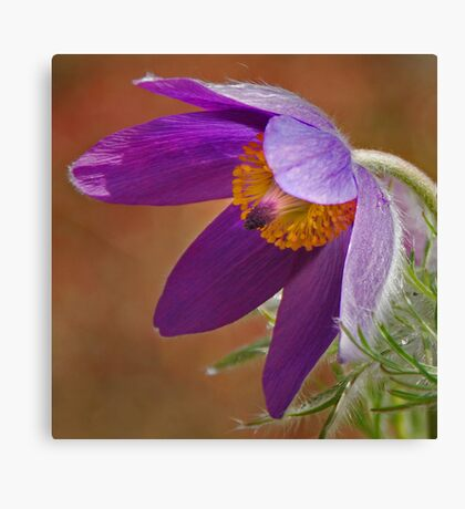 wind flower Canvas Print