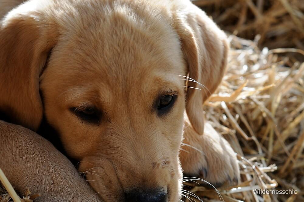 Puppy in Straw by Wildernesschic