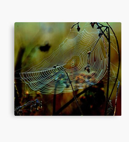 Web sight Canvas Print