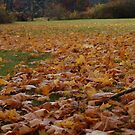 Leaves on the Ground! by flyprincess