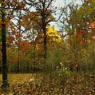 Painted Autumn by NatureGreeting Cards ©ccwri