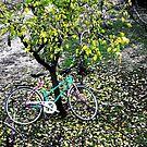 Bike in the yard by velkovski