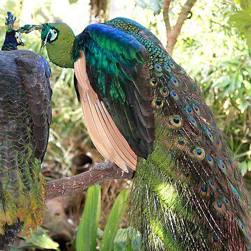 Rainforest bird 1  by Bluebelly