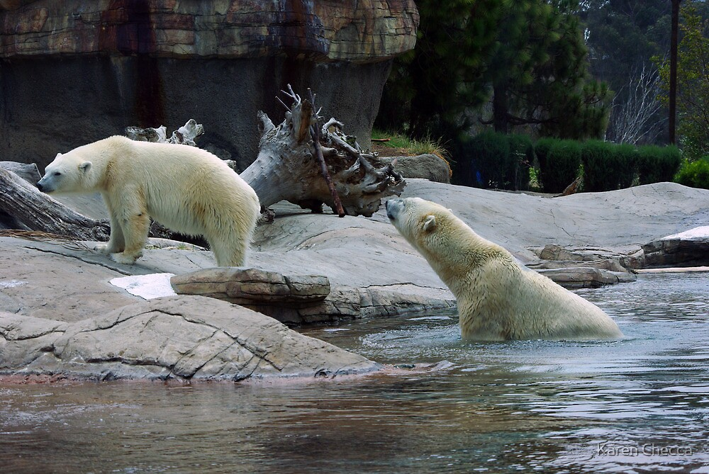 """""""Come on....I was only kidding....get back in"""" by Karen Checca"""