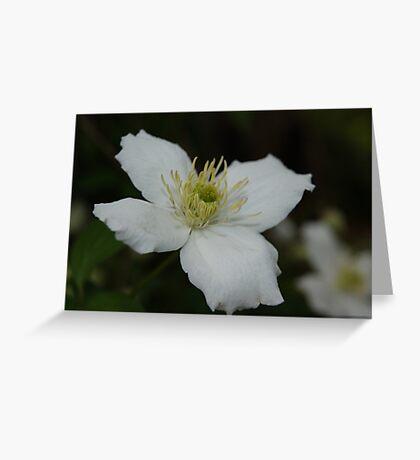 Wonderful White... Greeting Card