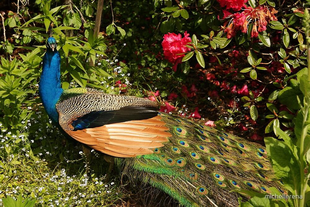 Pretty Peacock by michellerena