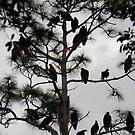 Tree full of Buzzards by nobettertime