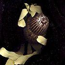 Banksia menziesii (Firewood banksia), flower scan II by Kirsten Spry