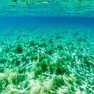 Under the Sea by Kana Photography