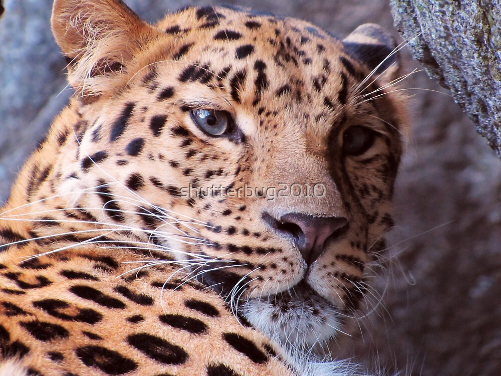 Spots and Whiskers by shutterbug2010