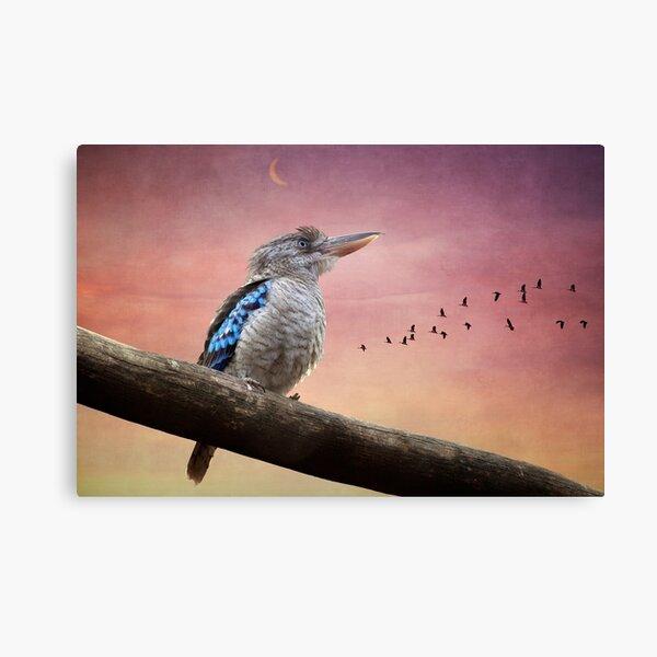 Kookaburra 0243  Canvas Print