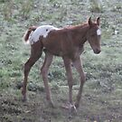 meet my Halloween foal, Tara by skyhorse