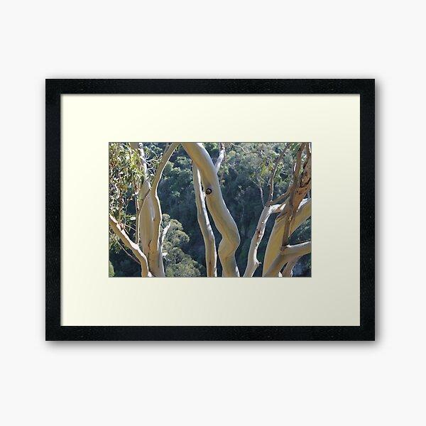 Dancing Gum Tree Bark Framed Art Print