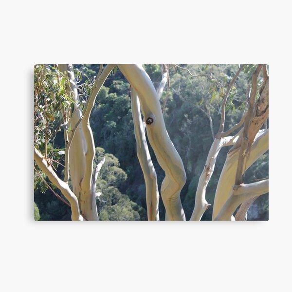 Dancing Gum Tree Bark Metal Print