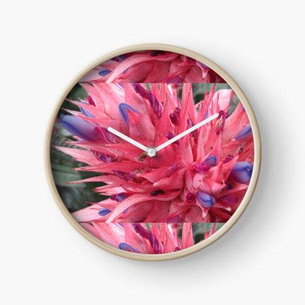 Pink and blue Bromeliaceae. Clock